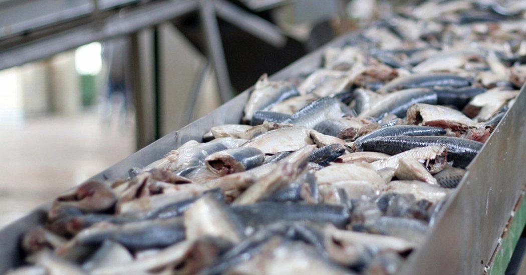 πρόγραμμα μεταποίησης αλιευμάτων